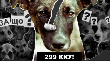 Здер шкуру і відрізав лапи сусідського пса: суд відправив жителя Турбова у в'язницю за жорстоке поводження з твариною