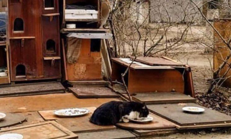 У Вінниці  старі шафи зі смітнику перетворили на житло для котів