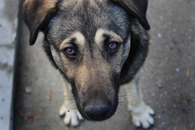 Житель Вінниччини сяде на п'ять років за вбивство собаки