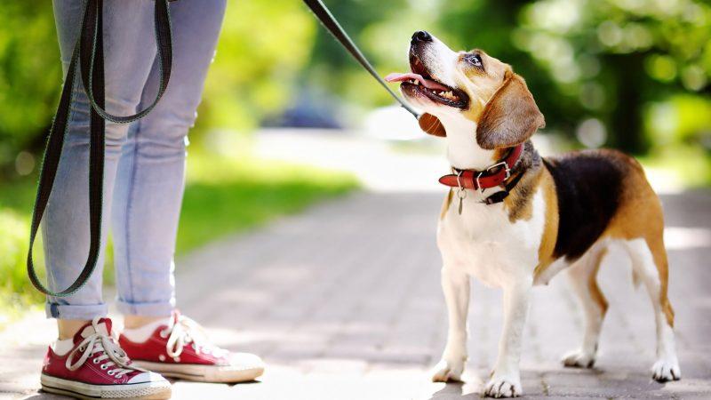 Якщо вінничани не прибиратимуть за своїми собаками – платитимуть штраф