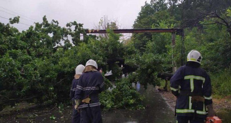 На Вінниччині вітер повалив дерево на дорогу