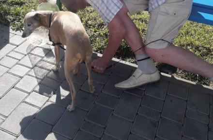 У Вінниці помер чоловік, який вигулював пса